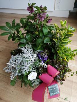 Coupe plantes deuil § Fleurs Vagabondes