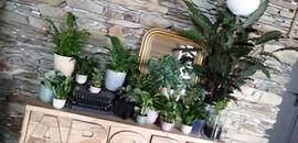 Jungle ! Plantes proposées sur le marché
