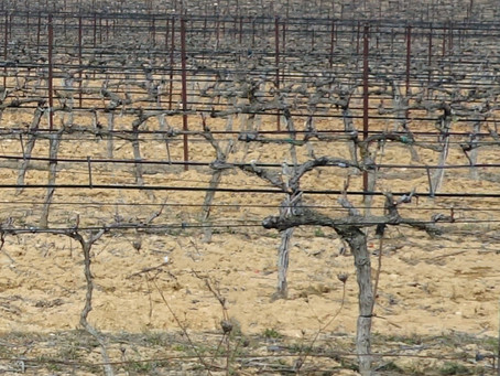 Winter Pruning: Why So Severe?