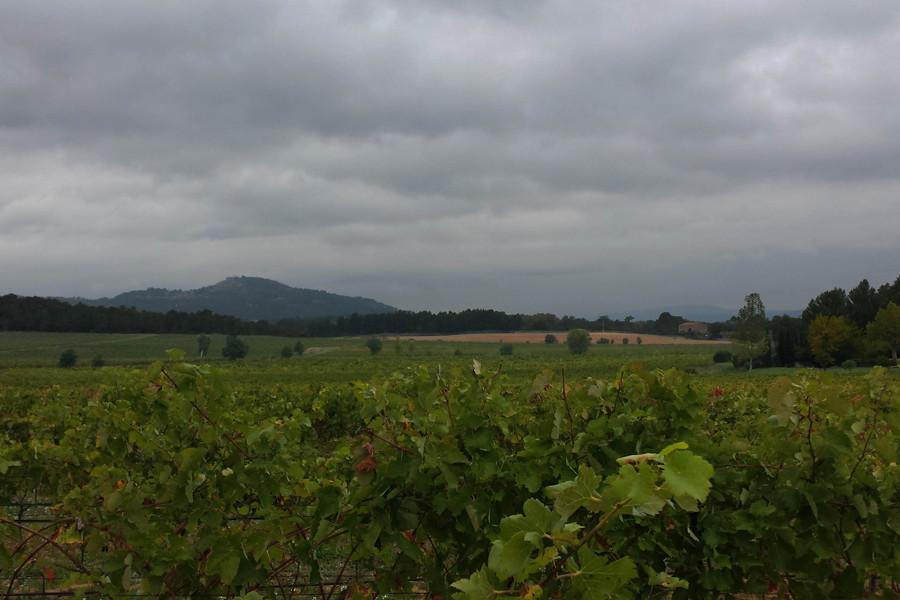 Solière vineyard under cloudy skies (Provence)
