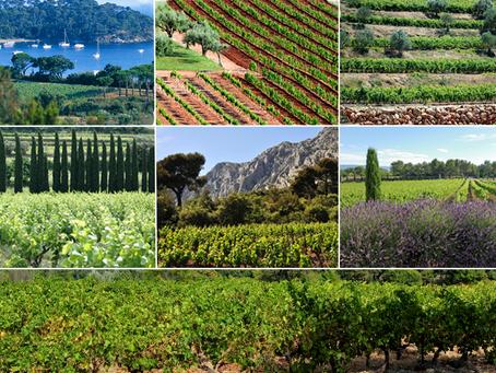 Celebrating Provence's Biodiversity