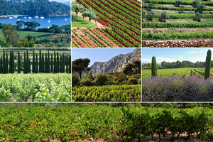 The diverse terroir of Provence