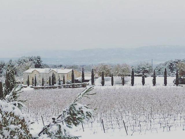 Solière vineyard under snow