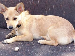 החיבור בין אוטיזם ובודהיזם בטיפול הפסיכולוגי - בעזרתו של כלב