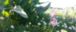 תקשורת בין צמחים