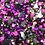 Thumbnail: Batty Sequin Mix