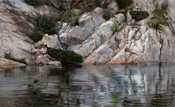 Northern Solitude (Common Loon)