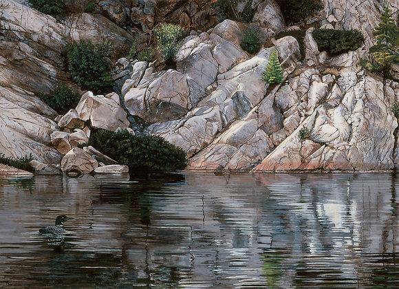 Northern Solitude - Common Loon