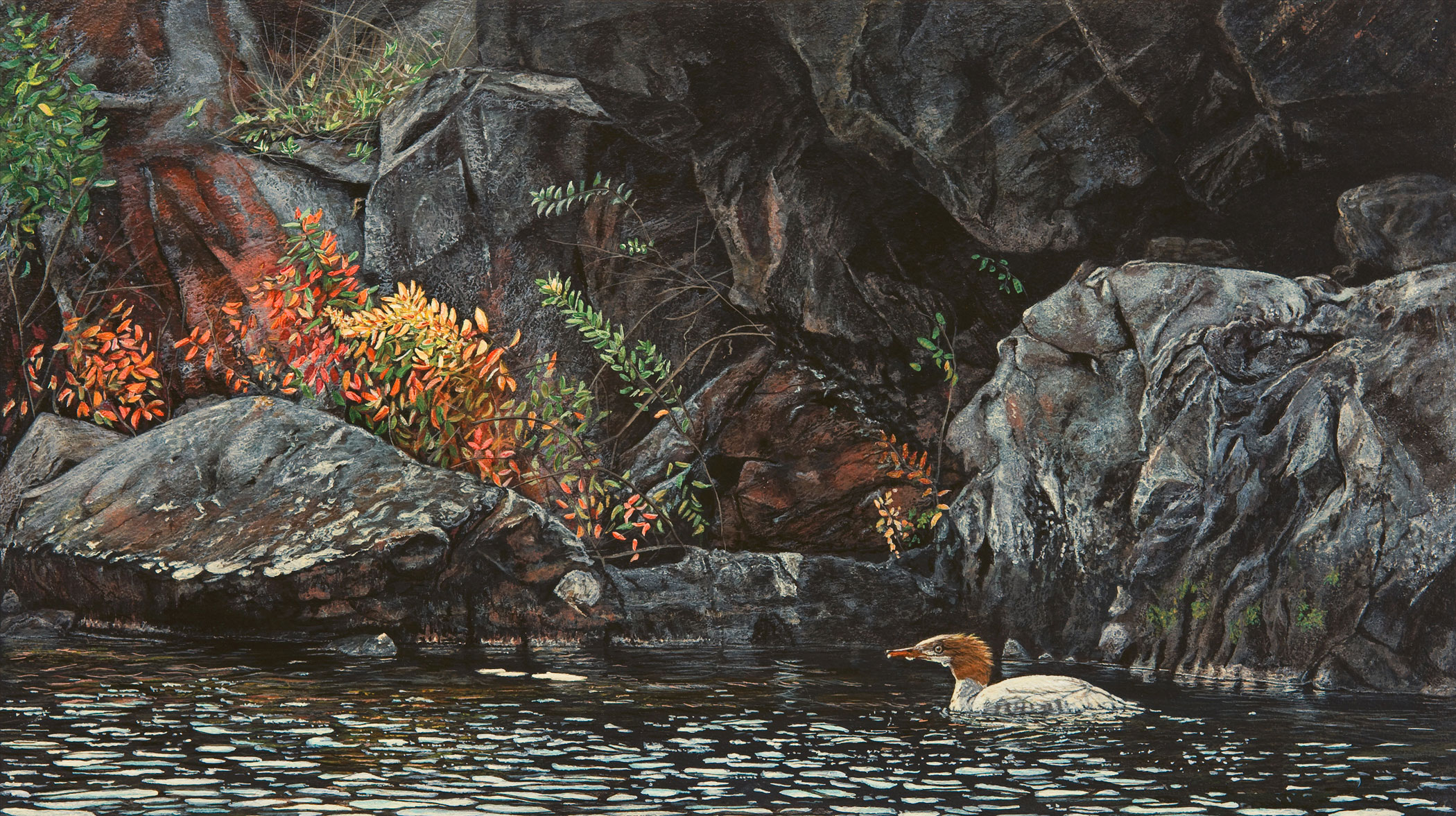 Autumn Light (Merganser)