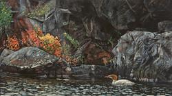 Autumn Light (Merganser)