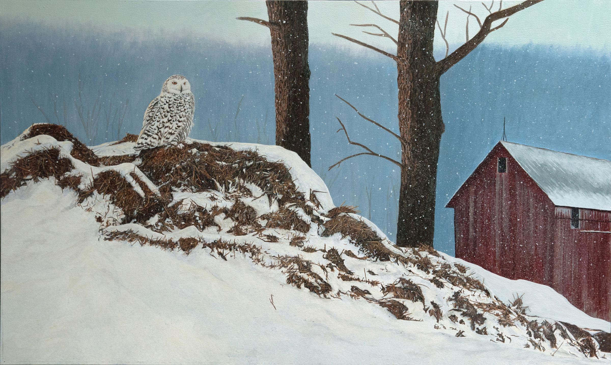 Silent Repose (Snowy Owl)