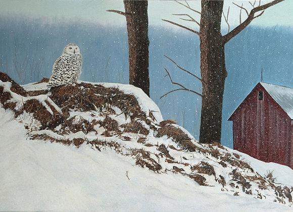 Silent Repose - Snowy Owl