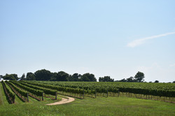 Locally Sourced Maryland Wines