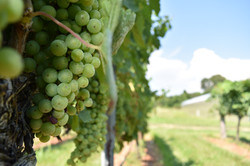 Maryland Wine Great Shoals Cellars