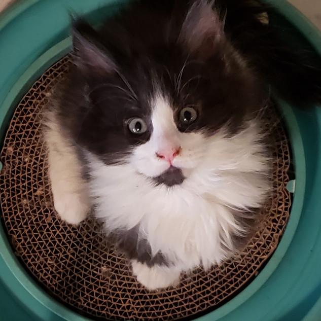 look very close at my eyes!