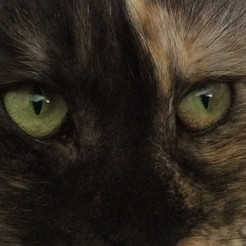 The eyes are a window to the soul