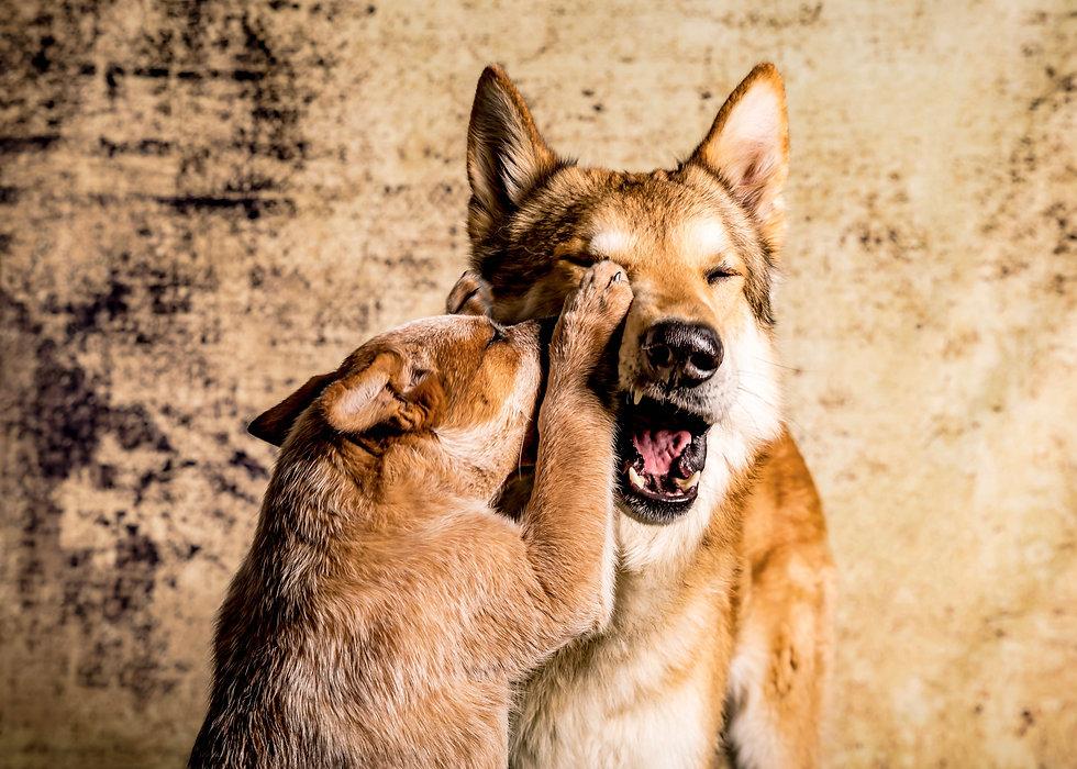 2 Hunde Foto.jpg