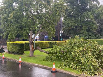 REMOVAL OF DANGEROUS TREES, FALLEN AND STORM DAMAGED