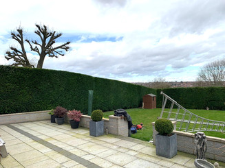 CONIFER HEDGE PRUNING & REDUCING HEDGE CUTTING & PLANTING