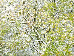 defender in green snow
