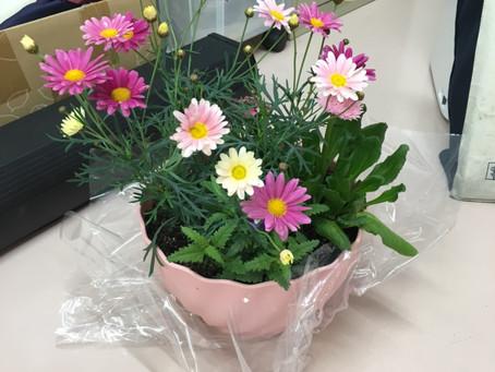 【今月の花】