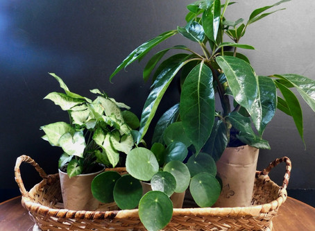 Tips on easy plant care at home with Mignonne
