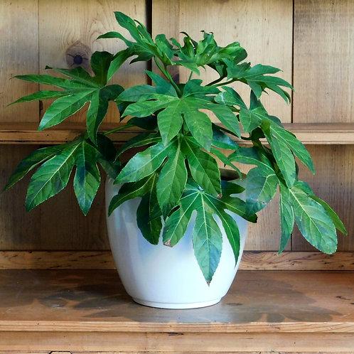 Medium Ceramic Eau Planter