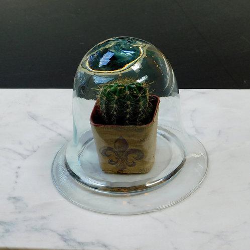 Petite Cactus