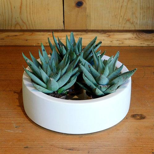 Petite Ceramic Planter