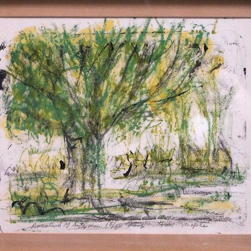 Framed Sketched Tall Maple Landscape