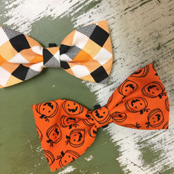for your dapper dog