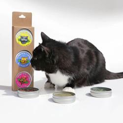 gourmet catnip