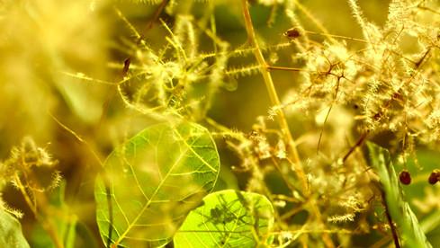 film-production_luxury_ville-de-grasse_3