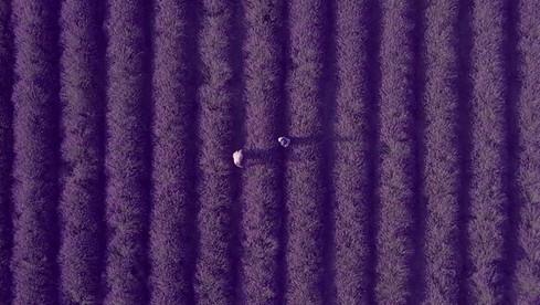 film-production_lavande_drone_1_kokoro.j