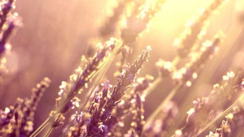 film-production_lavande_1_kokoro.jpg