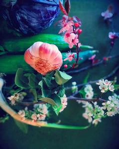 art-direction_flowers_olive2_kokoro.jpg