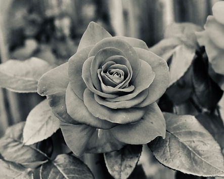 rose+art+print+blackandwhite.jpeg