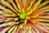 8F67FAC7-AEB2-45F8-A217-11127A14AE55_1_2