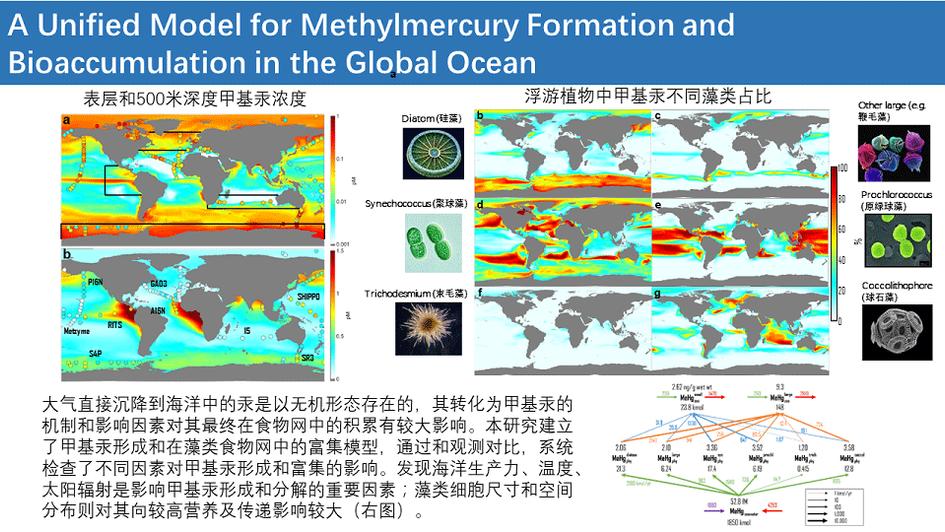 甲基汞与生物积累.png