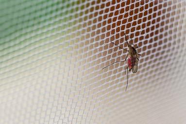 depositphotos_3658929-stock-photo-mosqui