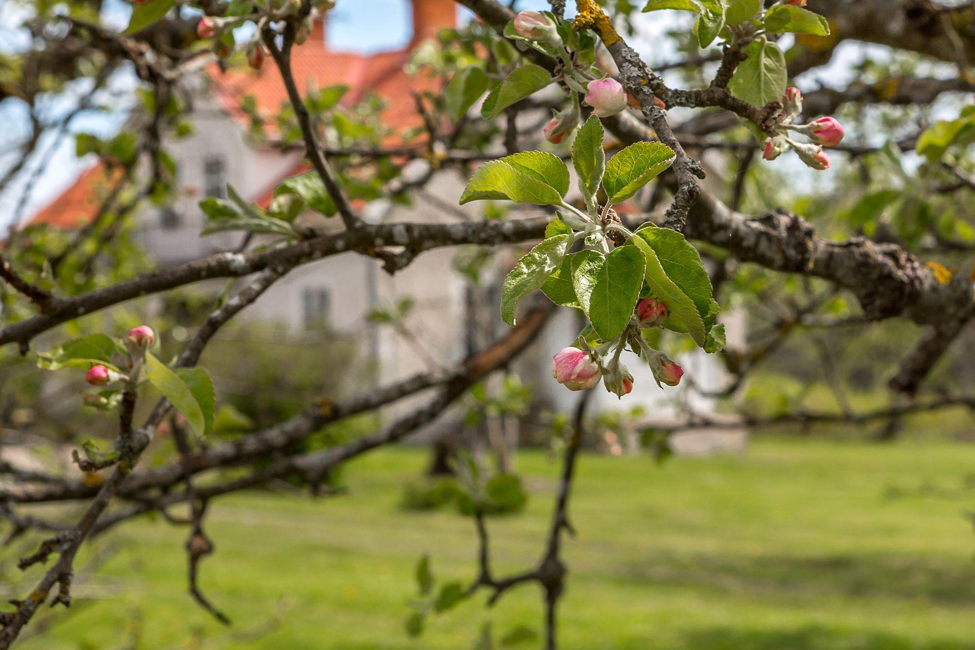 341547-30_Västra_Vegred_001