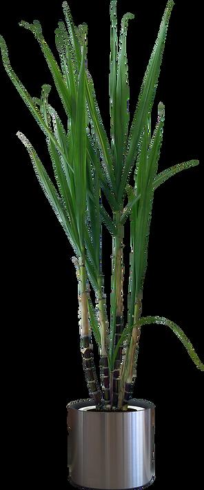 kisspng-flowerpot-houseplant-5af585a4f19