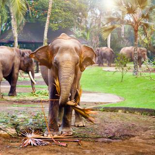 elephant_final_costco_icc.jpg