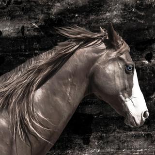 180701_laughing_pony-345.jpg