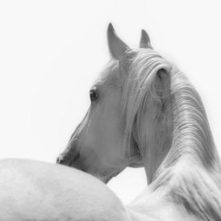 180701_laughing_pony-227.jpg
