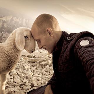 sheep 20x30.jpg