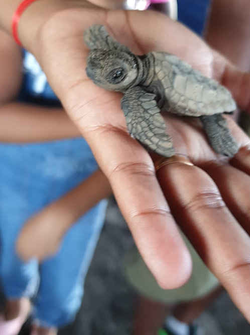 Turtle Spanning (Children)