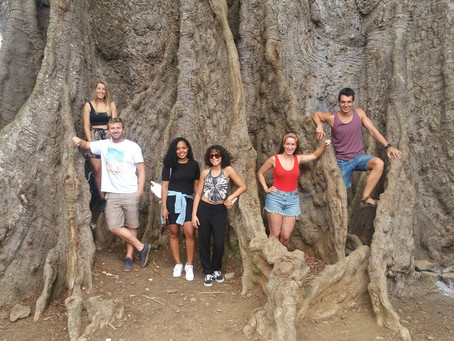The Poilão tree is over 500 years old.  Located in the town of Boa Entrada in Assomada. #bucketlist