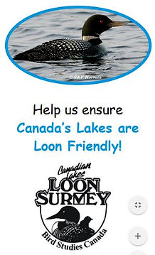 loon friendly lake.JPG
