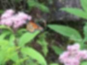 Monarch Aug 18, 2019 -1.jpg